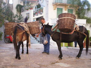 Cyclades - donkeys are a local form of transport
